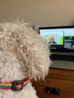 Photograph of a computer monitor showing the AFCP Quarterly Technical Meeting on screen, with a small white dog watching in the foreground.